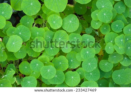 Green leave background - stock photo