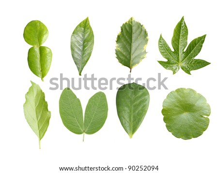 Green leave collection