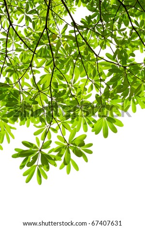 green leave isolated - stock photo