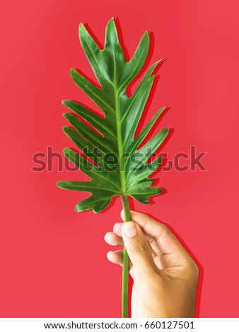 green leave on red background