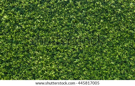 Green Leave wall Background