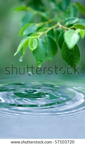 Green leaves and a water drop - the focus point is the water drop in the air and the small leaf above it. - stock photo