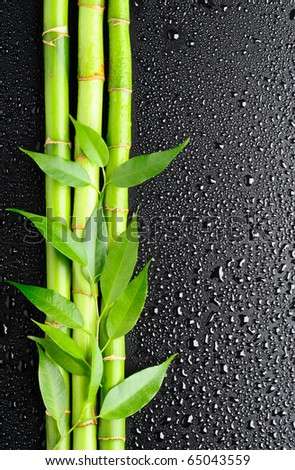 green leaves and bamboo grove on the black background