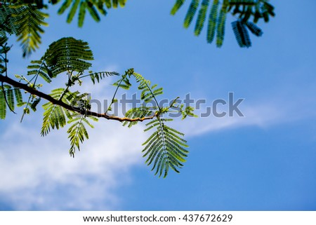 Green leaves and blue sky for background
