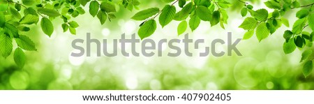 Green leaves and blurred highlights in the background build a natural frame in panorama format - stock photo