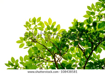 green leaves and branches on white background environment nature love earth concept for design and decoration - stock photo