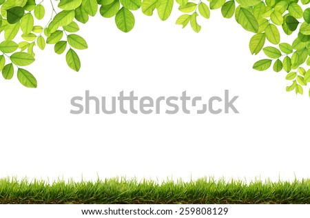 Green leaves and Green grass isolated. - stock photo