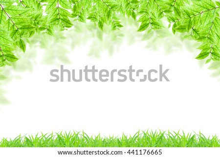 Green leaves and green grass isolated on white.  - stock photo