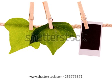 green leaves and instant photo hanging on a rope clothesline isolated on white - stock photo