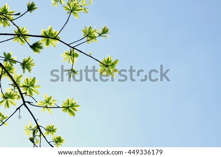 Green leaves and sky - stock photo