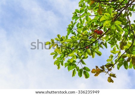 Green leaves and  sky background. - stock photo