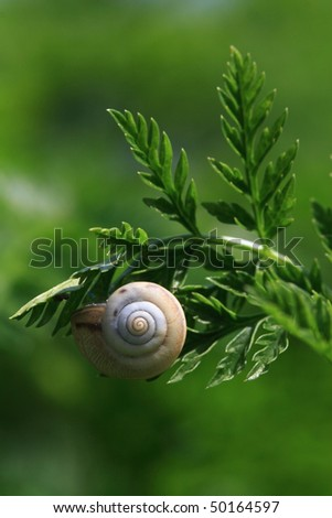 green leaves and snail, close-up - stock photo