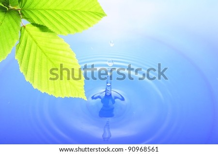 green leaves and splashing water drop showing spa or zen - stock photo