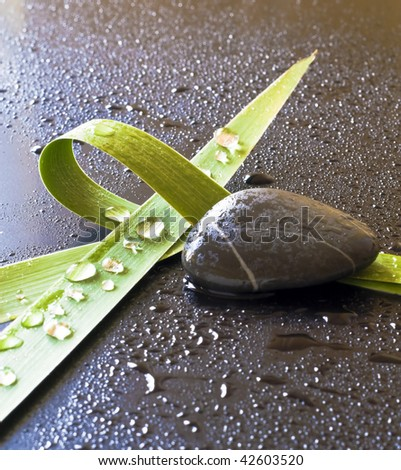 Green leaves and stones, drops of water in a dark background. - stock photo