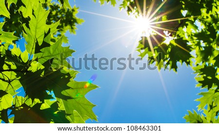 Green Leaves and sun with beautiful lens flare against the Sky