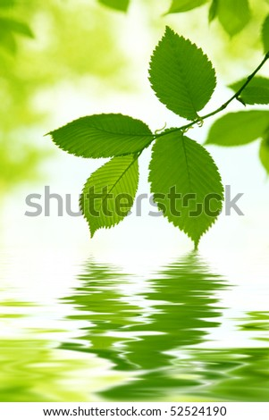 Green leaves and water reflection. - stock photo