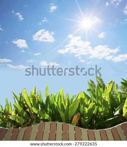 Green leaves and wood fence with blue sky, natural background. - stock photo