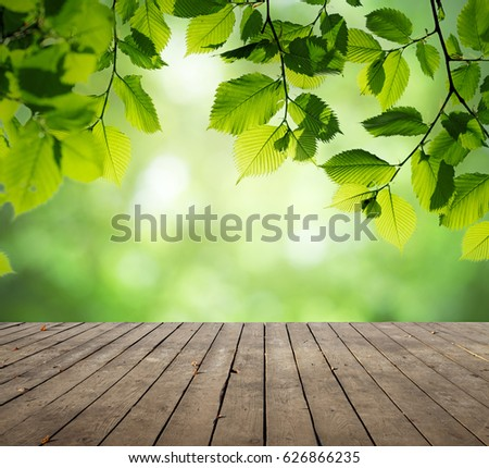 spring leaf table green new buds on branch spring stock photo 75418522 shutterstock