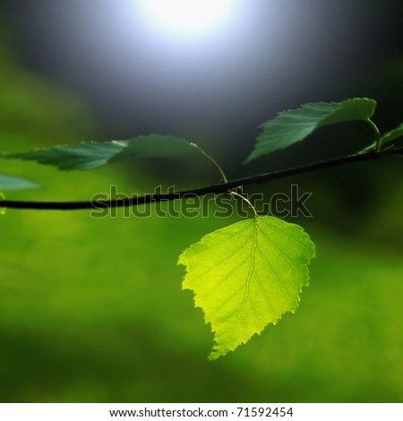 Green leaves at night. - stock photo