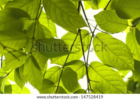 green leaves backgraound - stock photo