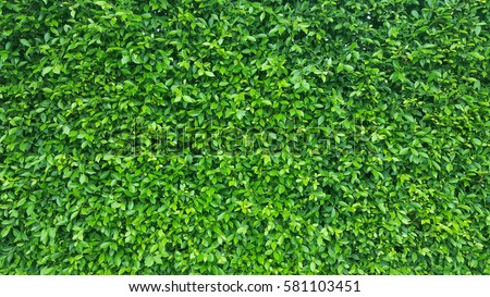 Green Leaves Background Stock Images, Royalty-Free Images ...
