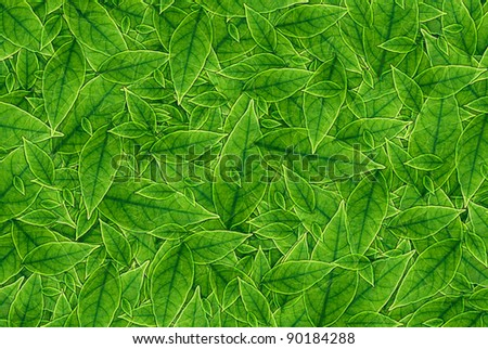 Green leaves background, A nature green concept. - stock photo