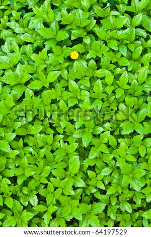 Green leaves background and yellow flower - stock photo
