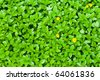 Green leaves background and yellow flowers - stock photo