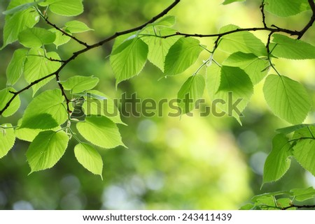 green leaves background in spring sunny day - stock photo