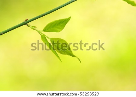 green leaves background in sunny day
