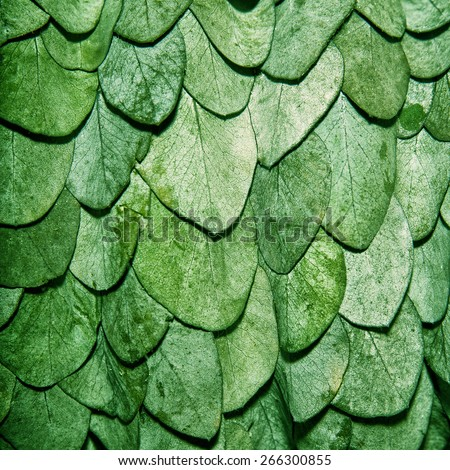 Green leaves background in the form of scales of a snake - stock photo