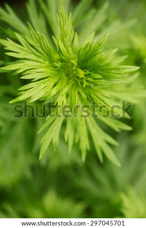 Green leaves  background.Macro shot, abstract.
