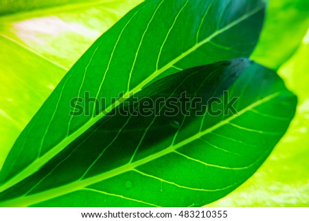 Green leaves background with lighting.
