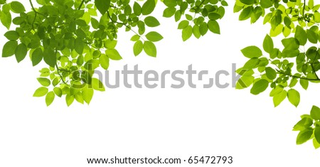 Green Leaves border - stock photo