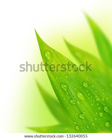 Green leaves border, abstract floral background, fresh foliage with dew drops, spring time nature