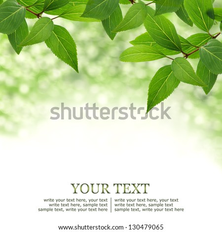 Green leaves border background with bokeh - stock photo