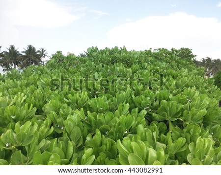 green leaves closeup with blue sky background