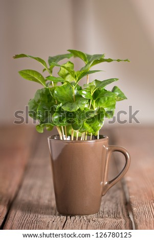 Green Leaves.Coffee - stock photo