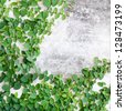 Green leaves creeper plant on the wall for background - stock photo