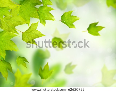 Green leaves falling down - stock photo