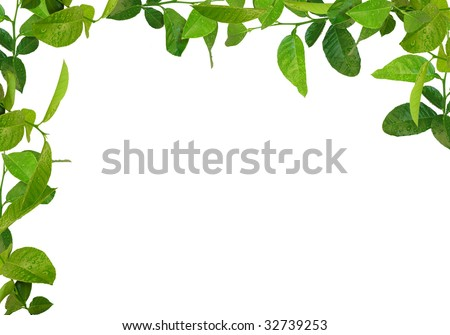 green leaves frame