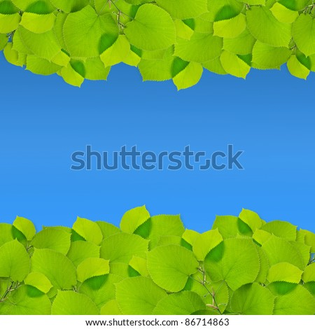 green leaves frame isolated on blue background - stock photo