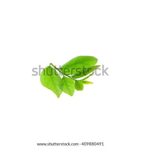 Green leaves frame isolated on nature background - stock photo