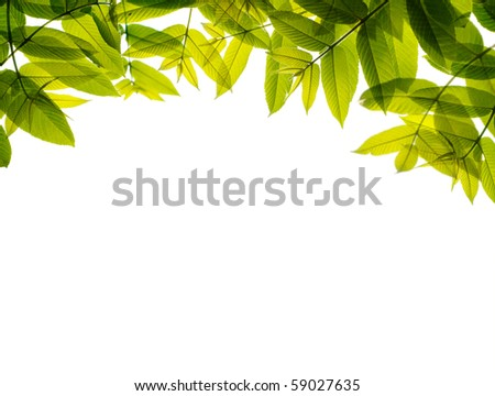 Green leaves frame, isolated on white. - stock photo
