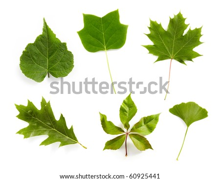 Green leaves from trees - stock photo