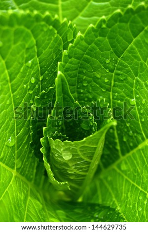 Green leaves grow with water drops. Natural patterns. Beauty of nature. Vertical view. - stock photo
