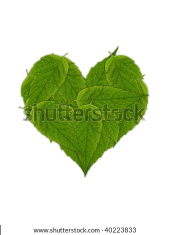 green leaves heart isolated on white background