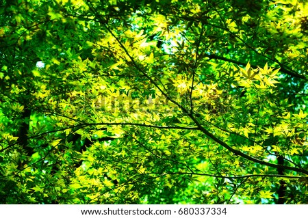 https://thumb7.shutterstock.com/display_pic_with_logo/167494286/680337334/stock-photo-green-leaves-in-a-park-in-japan-680337334.jpg