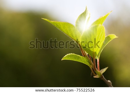 Green leaves in a sunny day