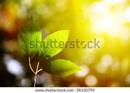 green leaves in autumn forest - stock photo